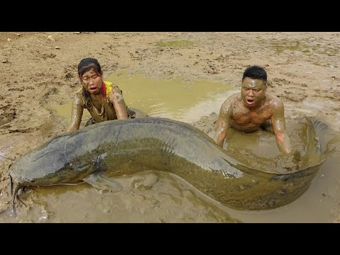 Unique Hand Fishing Catch Big Fish At Mud Pond - Cooking Fish For Survival
