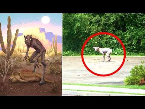 The Mysterious Chupacabra | Sightings & Encounters