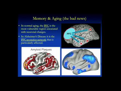 Human Memory, Aging and the Brain or Where Did I Put Those K