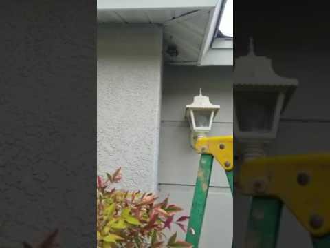 Man destroys yellow jacket nest with bare hands ORIGINAL