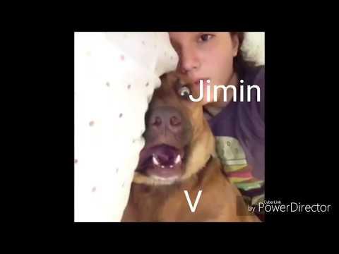 BTS as animal vines (bc that's original)