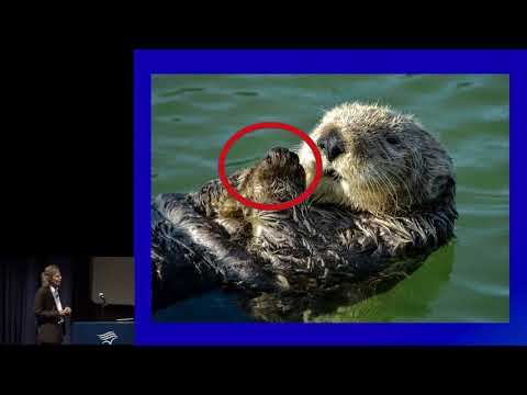 Kim Steinhardt - The Sea Otter Survival Story: A Human Obstacle Course