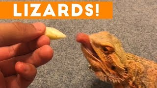 Download Funniest Lizard & Reptile Blooper & Reaction Videos of 2017 Weekly Compilation | Funny Pet Videos Mp3 and Videos