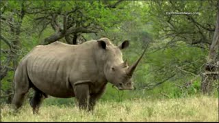 Rhinocéros : le moment d'agir, c'est maintenant !