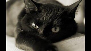 Кошка. Видео про кошек. История кошки