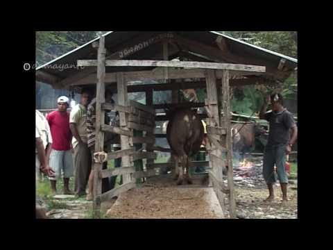 Pasar sapi Traditional Market COW |  Indonesia Travel Guide