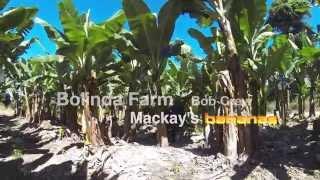 Banana Farm Tully Australia (Paddock) #gopro