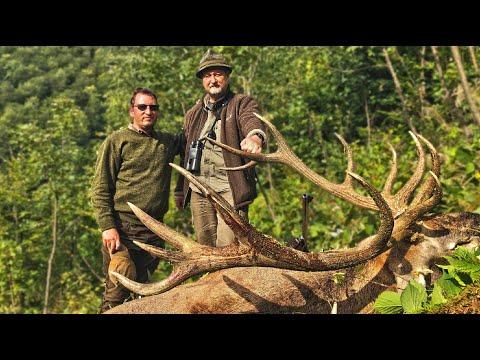 Red Stag Hunting In Romania - Hirschjagd In Den Karpaten - Kronhjort Jagt I Rumænien