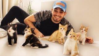 Ich verschenke meine BABY Katzen & DU kannst Eins haben!! 😍