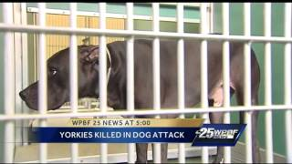 Yorkshire Terriers Killed In Dog Attack