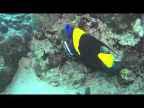 The K Guide - Dive in Djibouti!.mov