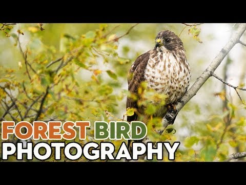 Tips For Photographing Forest Birds