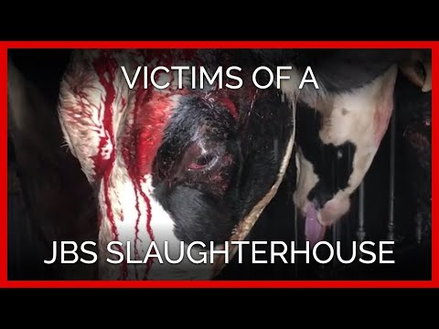 Download Youtube: A Whistleblower Reveals the Victims of Botched Shots to the Head at a JBS Beef Slaughterhouse