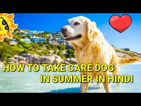 How to take care dog in summer | In HIndi | how to care dog during summer