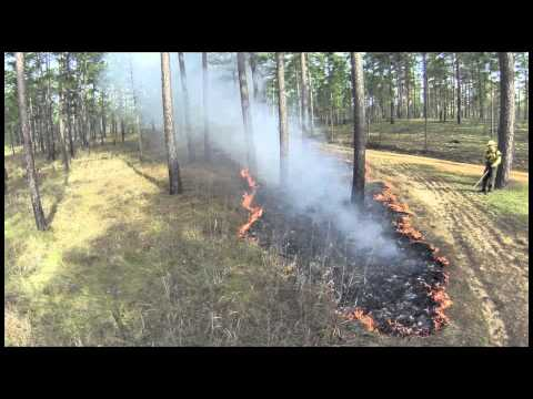Wade Tract Prescribed Fire