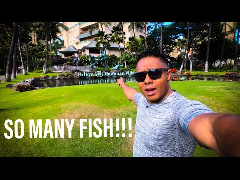 Freshwater Fish In Hawaii, Asian Arowana, And Amazing Reef Tanks!