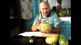 видео Выращивание и полезные свойства брюквы