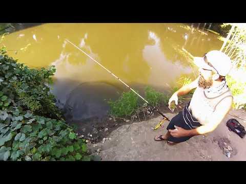 Catfishing Sacramento