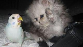 Γάτες Και Σκύλοι Εναντίον Παπαγάλοι - Συλλογή Αστείο Και Χαριτωμένο Ζώο