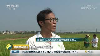 [中国财经报道]江西万安:高温少雨 农田干裂| CCTV财经