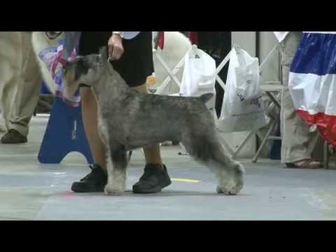 GCHP Cachet Majestic Night Storm Wins Best of Breed!