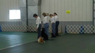 Team Obedience Icdoc Senior Moments Nauti - Poms 4/10/2010