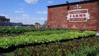 Fenway Farms - Project of the Week 7/6/15