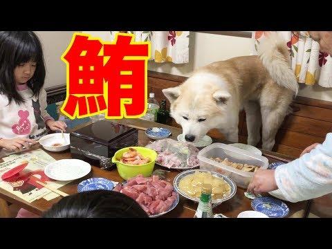 旨い!鮪を喰う!正月ご馳走食べて満足の秋田犬・大型犬達
