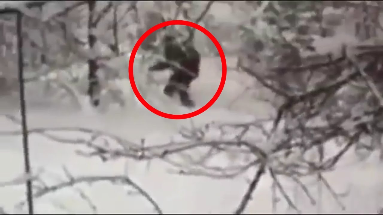 Russian bigfoot captured
