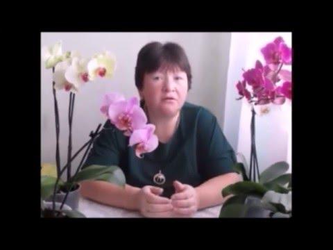 Подарили орхидею. - Леди