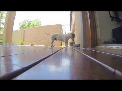 Dog Attack tail (FAIL)