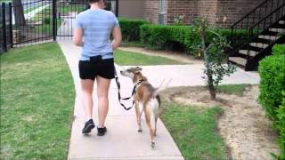 3 Steps To Teach Your Dog To Walk On A Loose Leash
