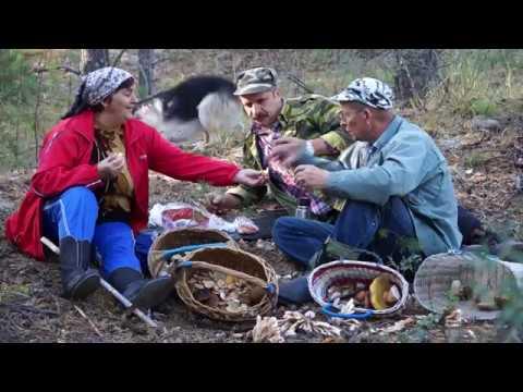 Охотники на привале, поляны и Сиамские грибы или гриб?
