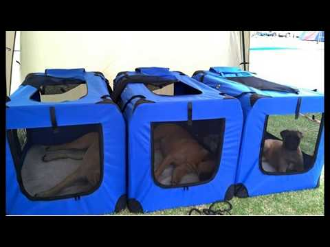 Comparing a collapsible dog and cat crate over a wire or hard plastic pet crate.