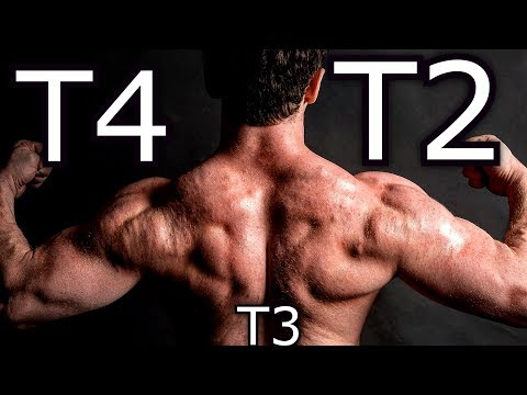 T2 Vs T4 Compared To T3   Experience/Results/Side Effects   Bodybuilding Fat Burner PED