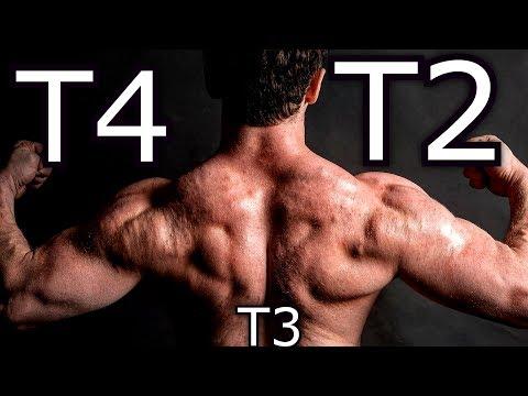 pierderea de grăsime t3 vs t4)