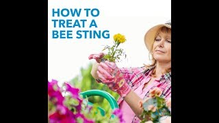 How to treat a bee sting