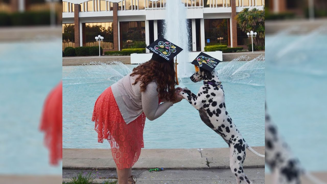 Sweet service dog receives her very own cap at owner's graduation