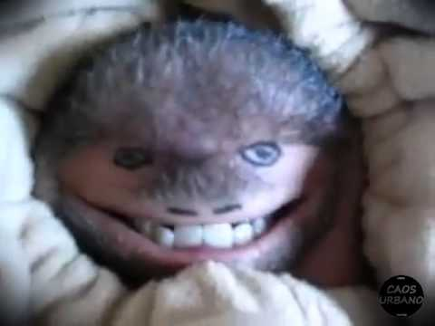 O bicho mais feio do mundo youtube - Bichos en casa fotos ...
