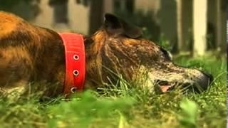 Ужесточение правила содержания собак и ответственность их хозяев