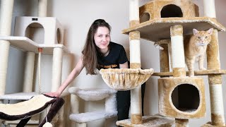 Top 5 Best Cat Trees (We Tried Them All)