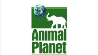 Animal Planet Station Id
