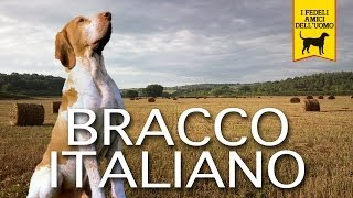 BRACCO ITALIANO trailer documentario