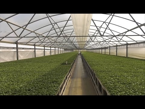 Georgia Transplant Producer is Major Supplier for Vegetable Growers