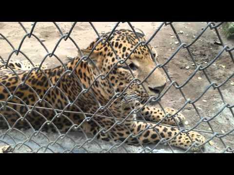 Jubilee park zoo
