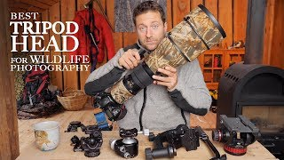 Best TRIPOD HEAD for WILDLIFE PHOTOGRAPHY | Ballhead vs gimbal vs video head