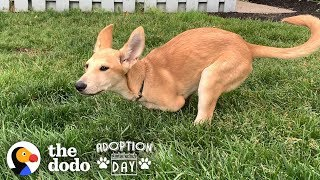 Kangaroo Puppy Bounces Into The Best Forever Home | The Dodo Adoption Day