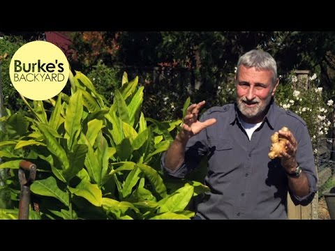 Backyard Farming DVD - Turmeric