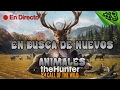 TheHunter Call of the Wild #3 - Ciervo Rojo con gran cuerna !!!! - Español 1080p HD / Directo