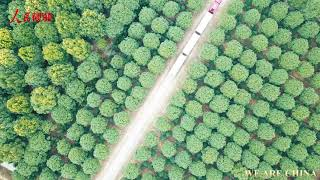 A green path to wealth: ecological economy booms in Chinese villages